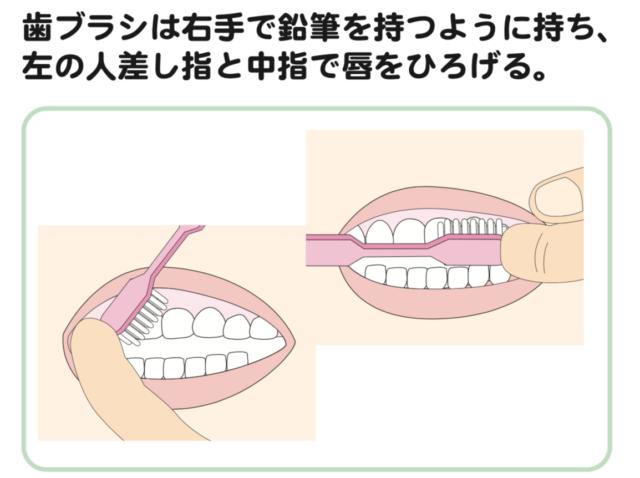 八王子レイス歯科クリニック歯科衛生士コラム赤ちゃんの歯磨き_仕上げ磨きの歯ブラシの持ち方は鉛筆を持つように