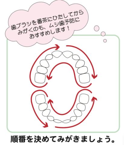 八王子レイス歯科クリニック歯科衛生士コラム赤ちゃんの歯磨き_仕上げ磨きの歯ブラシの順番_番茶にひたした歯ブラシもおすすめ