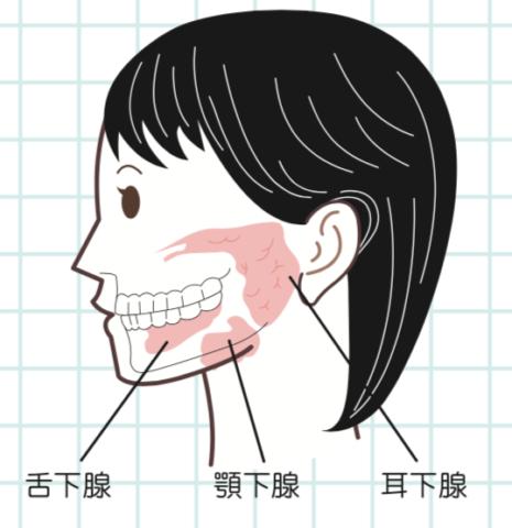 八王子レイス歯科クリニック|歯科衛生士コラム|口腔乾燥について|唾液腺マッサージ1